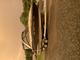 27.5FT Monterey SCR260