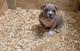 One puppy