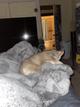 One puppy husky