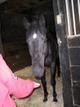 Pepe the retired racehorse stallion