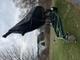 26 ft sailboat on custom trailer